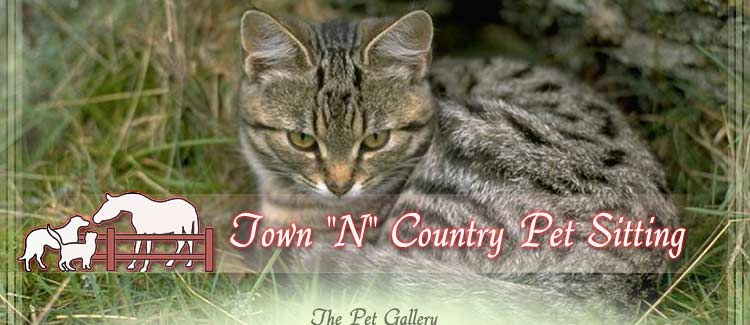 Town N Country Pet Sitting